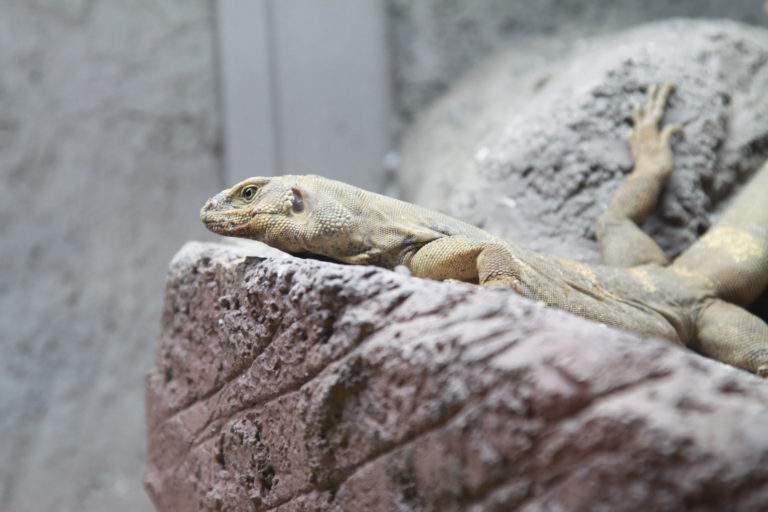 animal zoo iguana