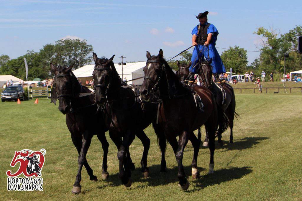 Hortobágy ló horse
