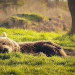 We introduce you: the Bear Farm in Veresegyháza – PHOTO GALLERY