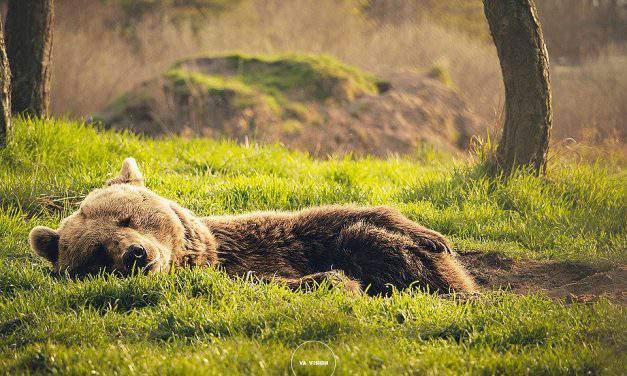 We introduce you: the Bear Farm in Veresegyháza – PHOTO GALLERY
