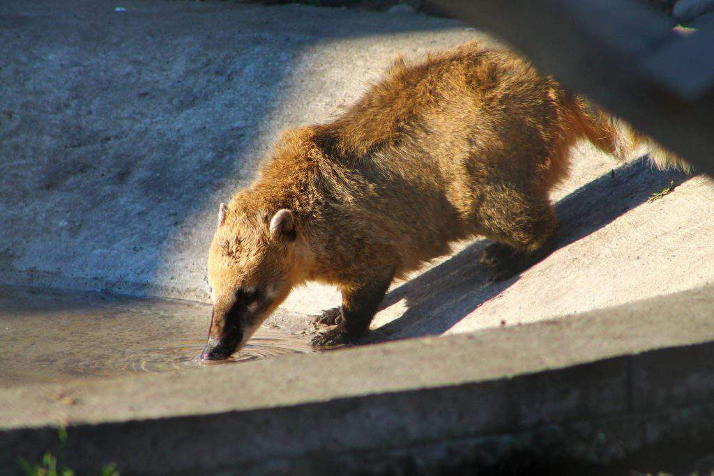 bear farm Veresegyháza zoo South American coati
