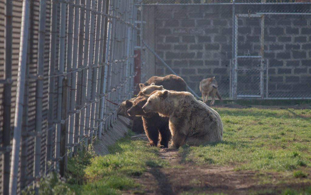 bear farm Veresegyháza zoo
