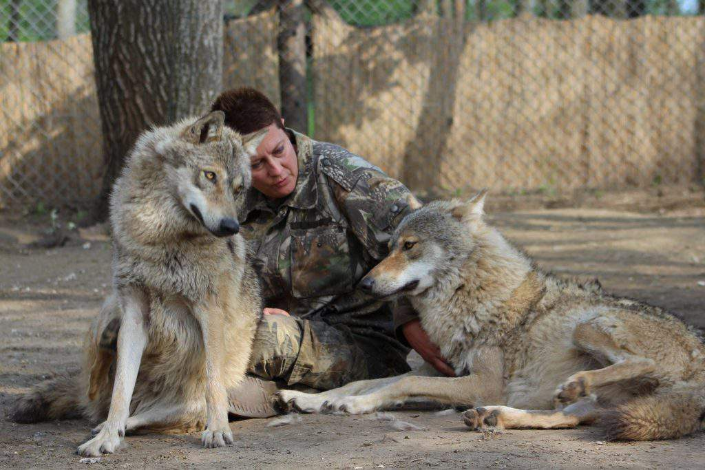 bear farm Veresegyháza zoo wolf wolves