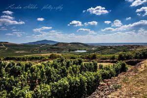 Tokaj wine World Heritage