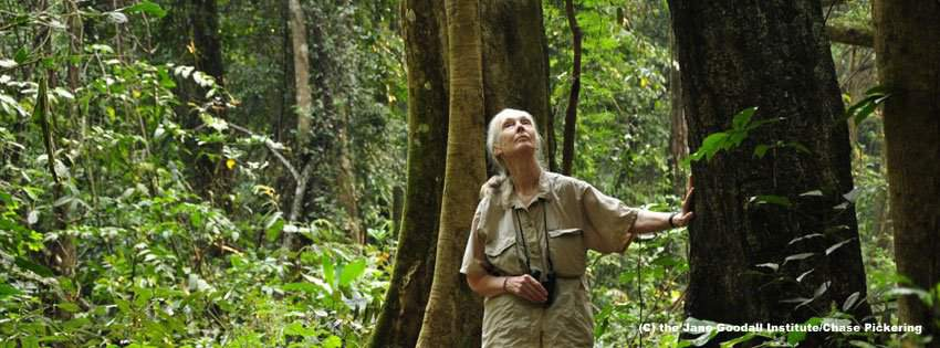 Jane Goodall animals science