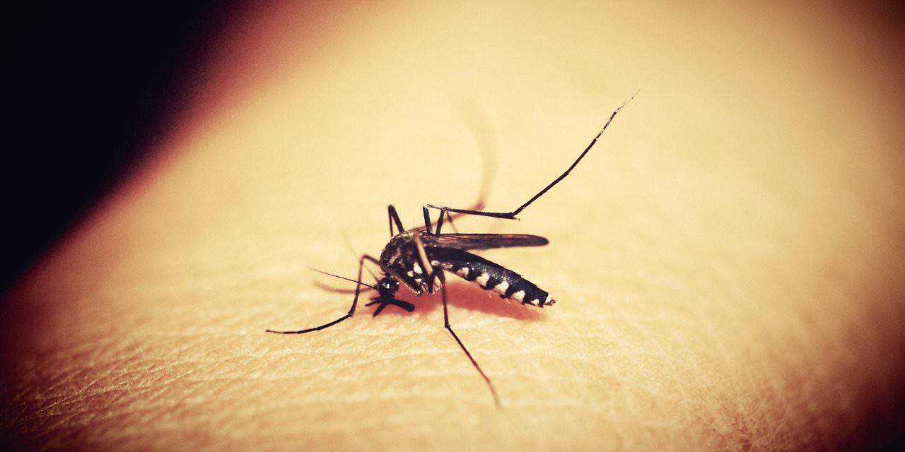 Great news! Hungarian team develops method helping malaria drug production