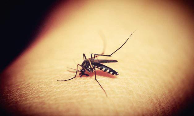 Great news! Hungarian team develops method helping malaria drug production