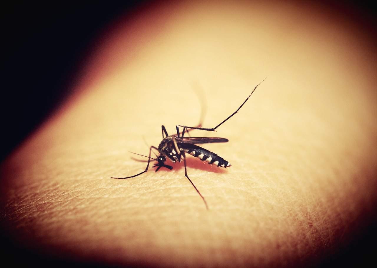 mosquitoe malaria