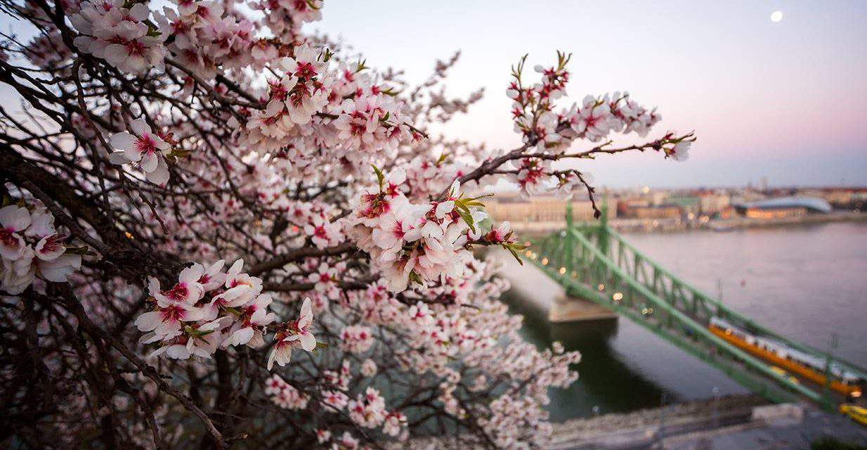 The best outdoors programs in Budapest to enjoy spring