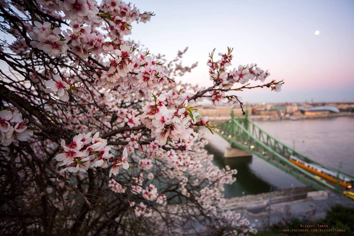 rizsavi photography budapest danube spring