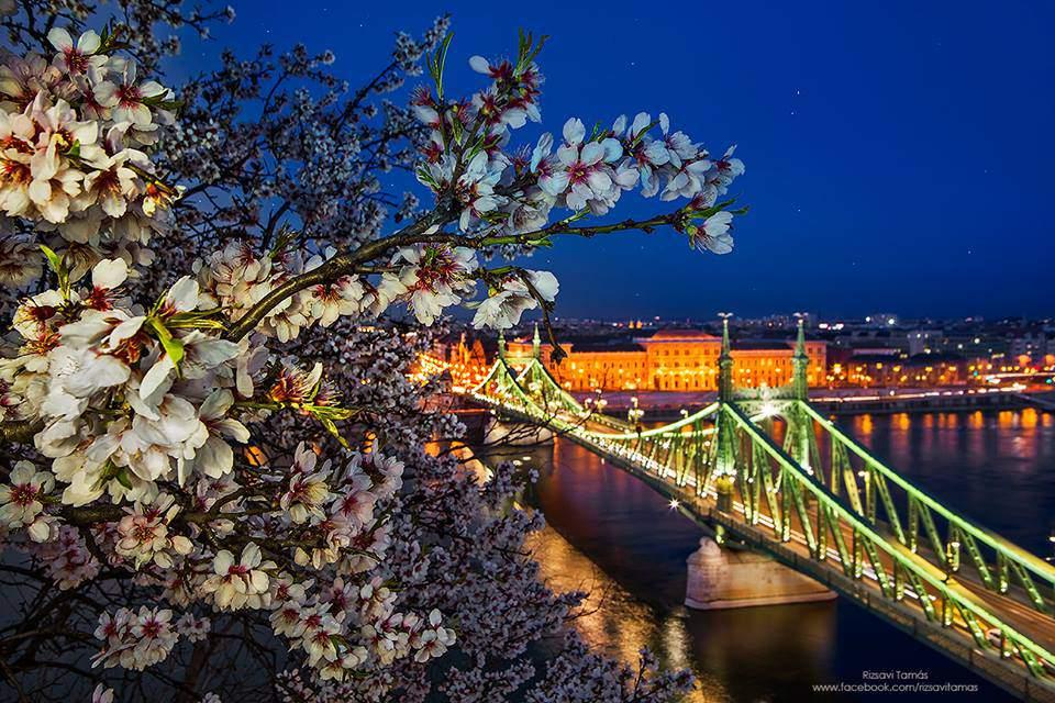 rizsavi5 spring night liberty bridge danube budapest photography