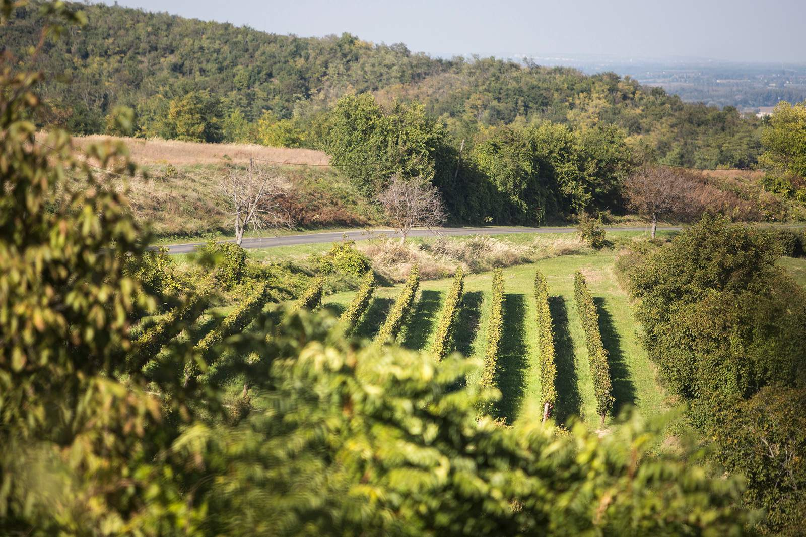 Szekszárd wine region
