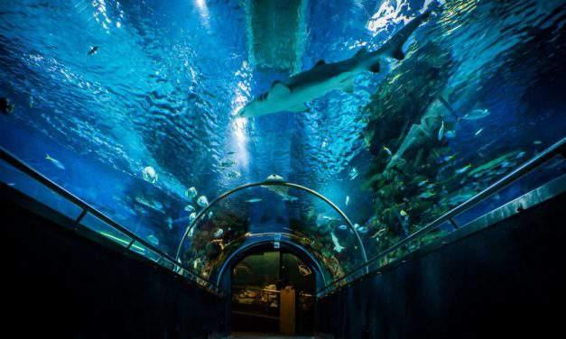 Underwater wonderland in Budapest: the Tropicarium