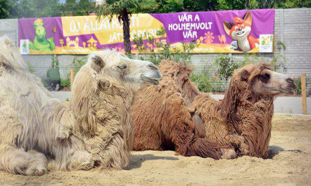 New play park opens in Budapest Zoo