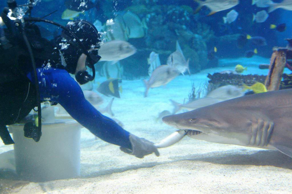 shark tropicarium
