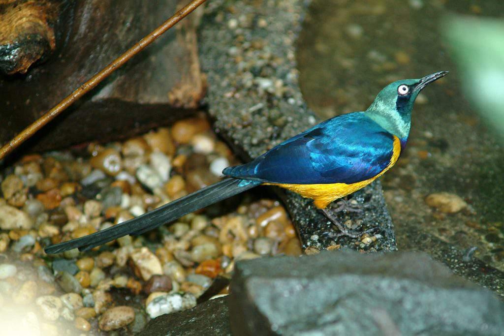 rain forest bird tropicarium