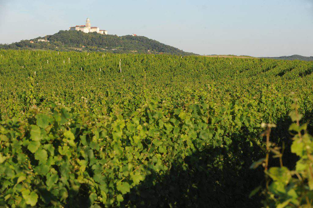 pannonhalma wine