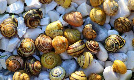 Hungarian ancestors ate snails!