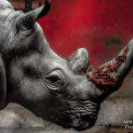 photography animal wildlife