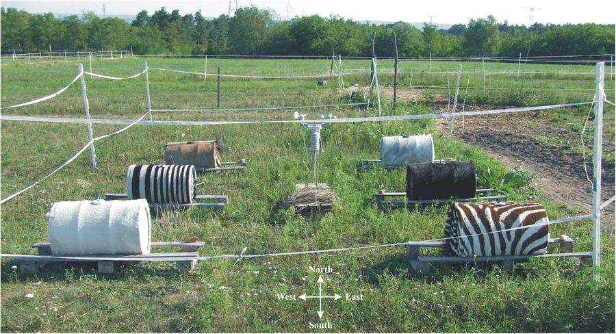 zebra stripes, research, experiment