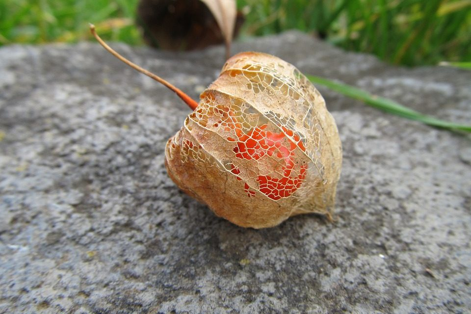 The most bizarre-looking native Hungarian plants