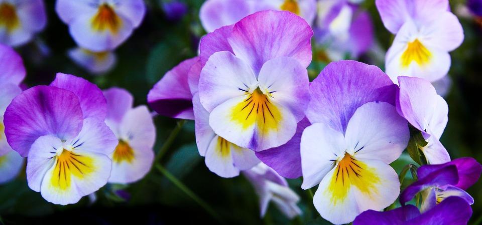 vadárvácska flower