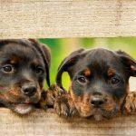 Jobbik: Animal abusers must be given deterrent punishment