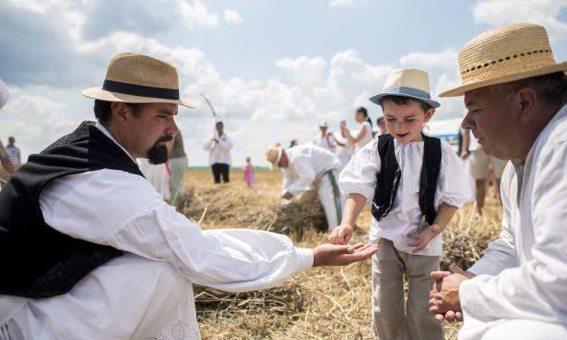 Hungary wheat crop reaches 4.8 tonnes