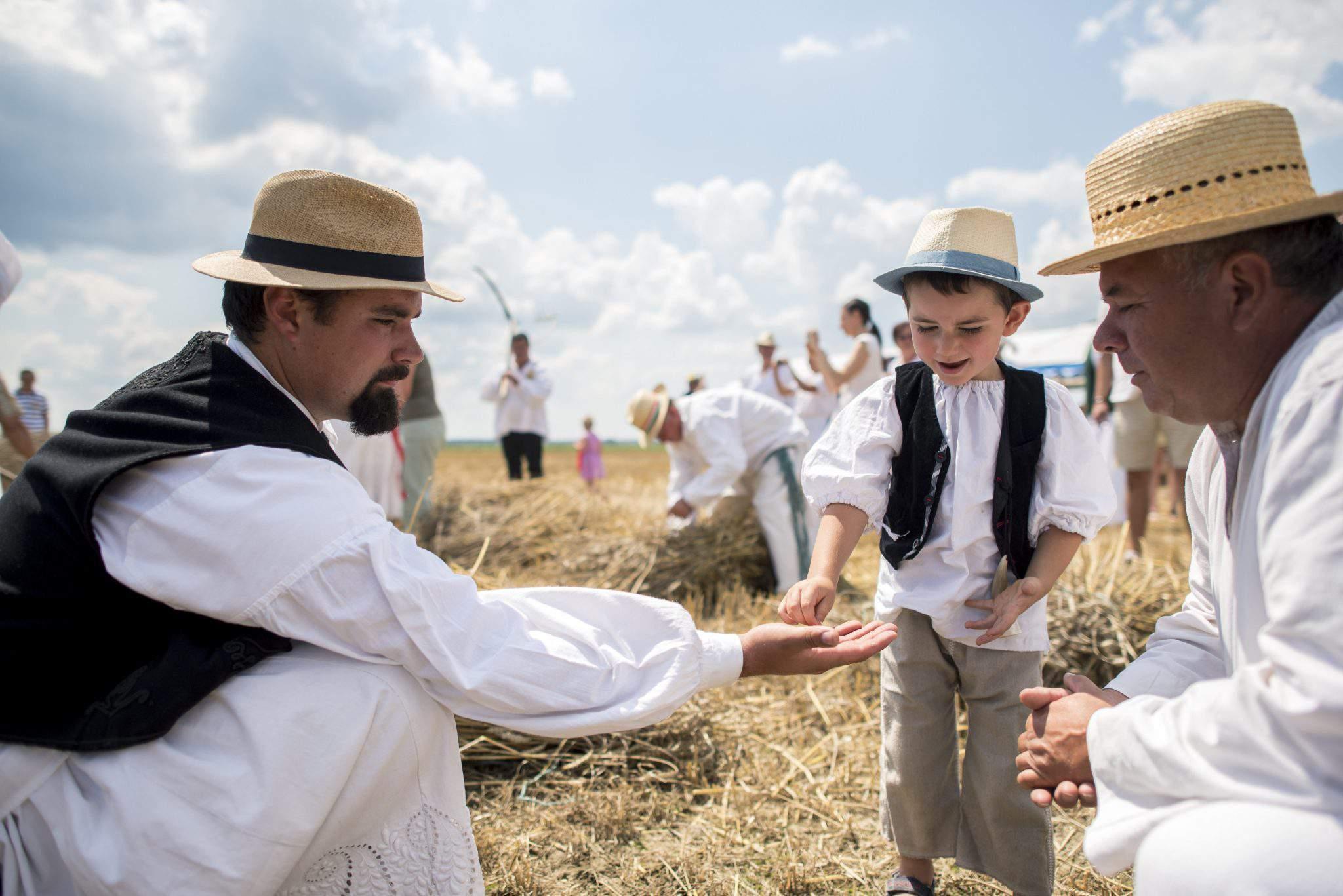 harvest hungary europe