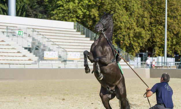 Szilvásvárad equestrian centre to open today – PHOTOS