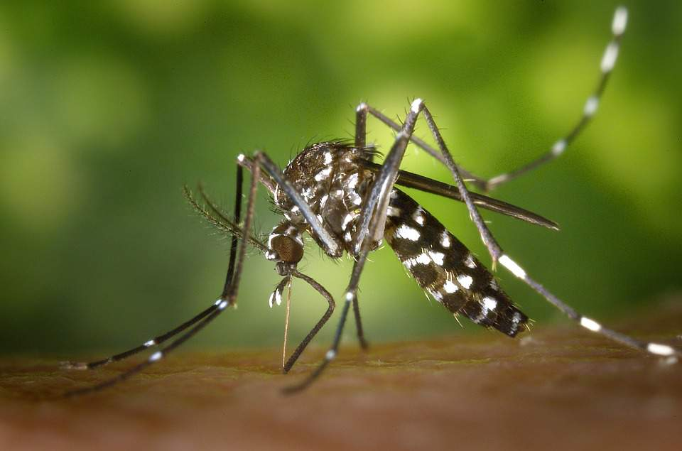 West Nile fever in Hungary: 16 infected last week