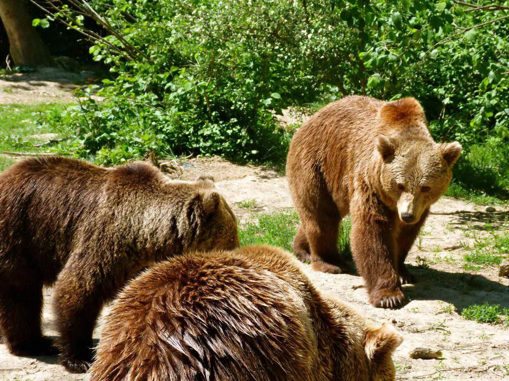 bears Szeklerland