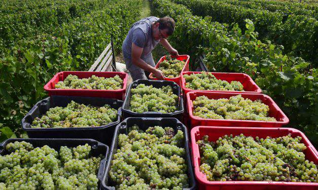 Inexpensive Hungarian wines praised by the Independent
