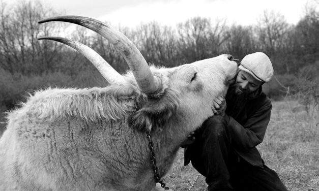 Famous Hungarian Nomad travelling in an ox wagon for 14 years killed in France – photos, video