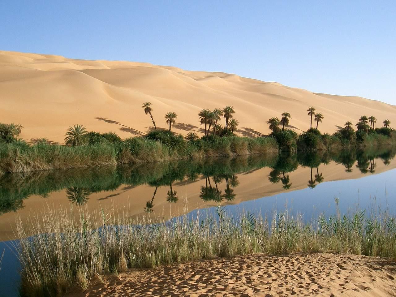 oasis sahara