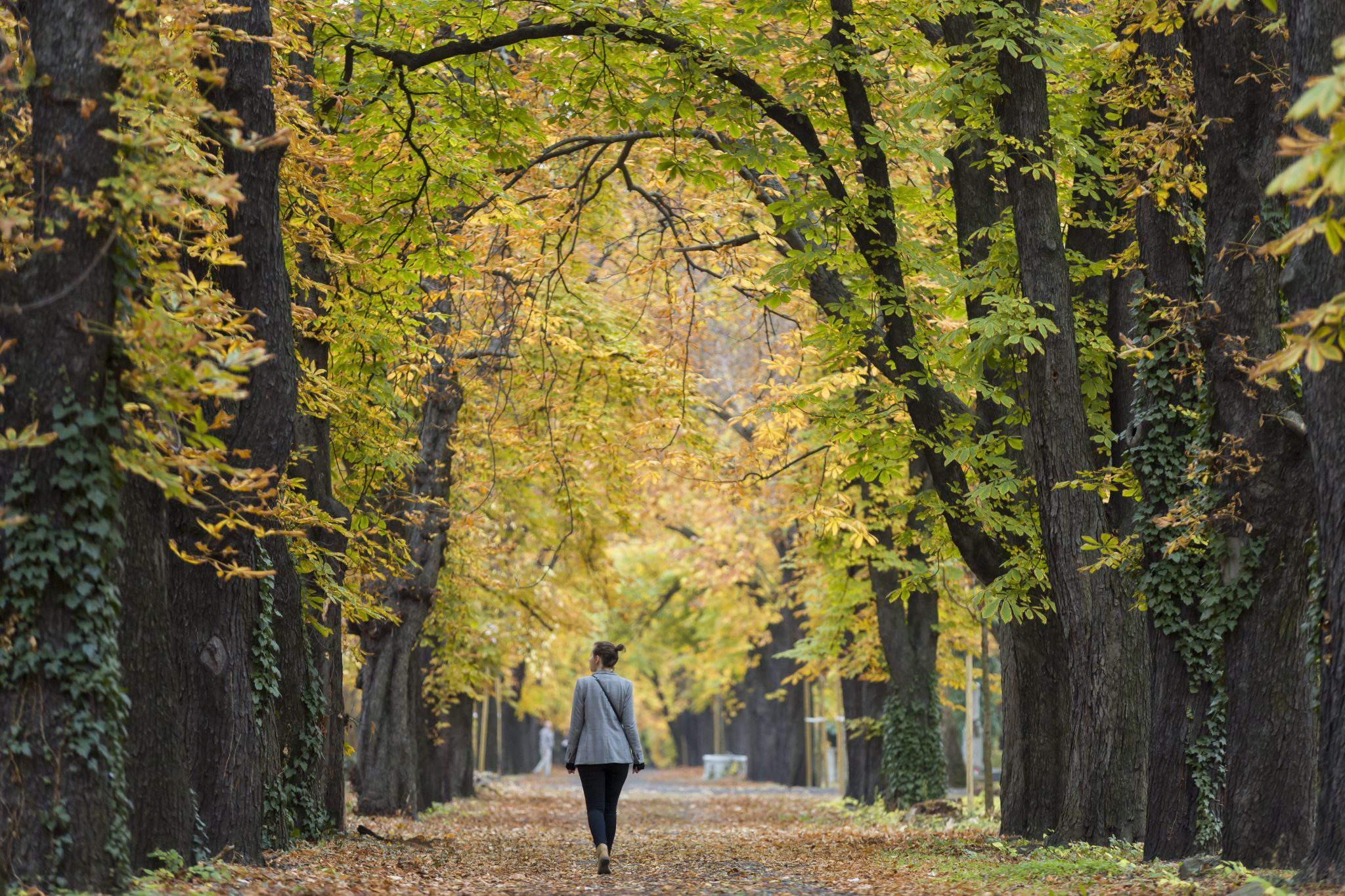 autumn Budapest