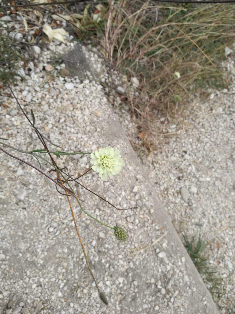 flower, nature, trip