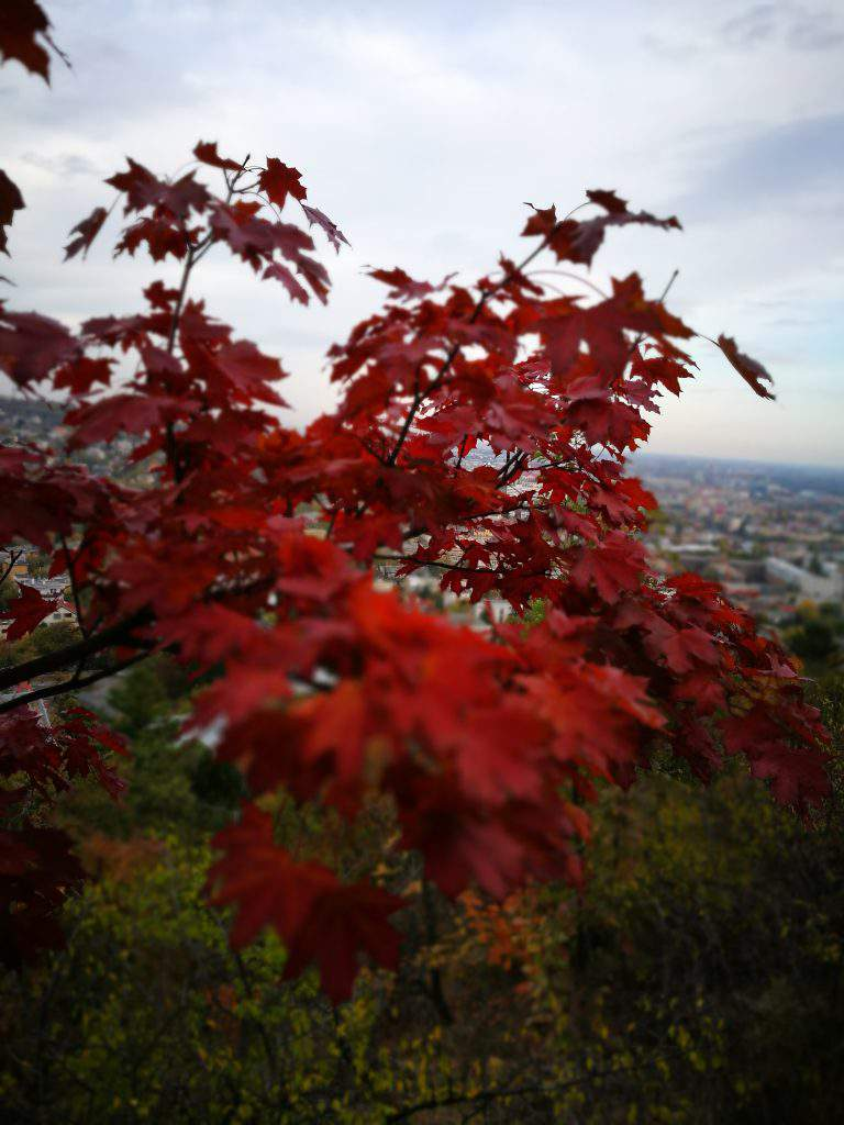 leaves, sas, hill