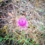 flower, budapest, nature