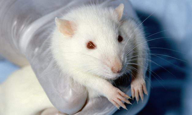 Animal testing to be banned in Hungary?