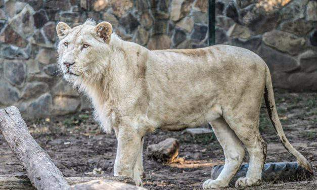 Hungarian zoo becomes the best in Europe