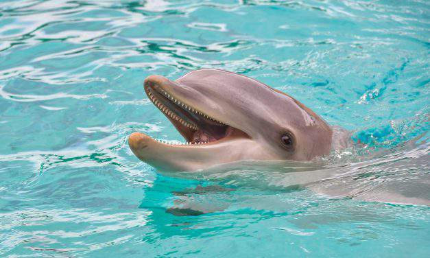 Hungary to open its first dolphinarium in Budapest