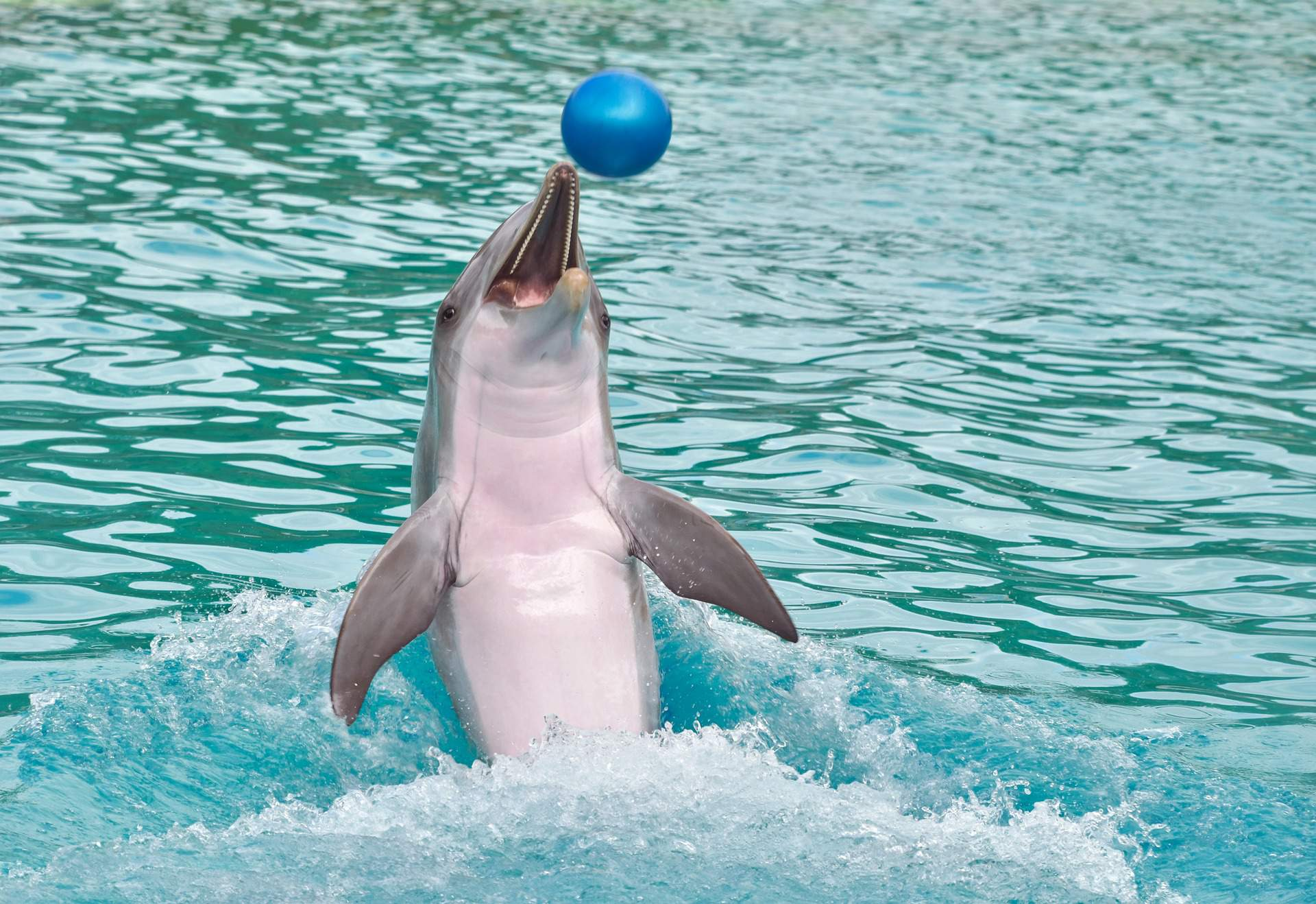 dolphin, water, sea, ball, animal