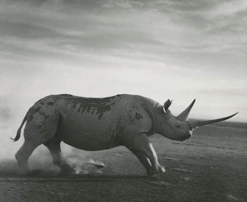 photo, Africa, Ylla, shoot