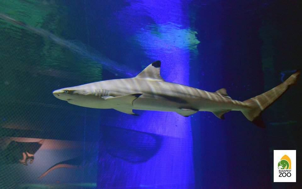 shark, zoo, animal, marine, sea