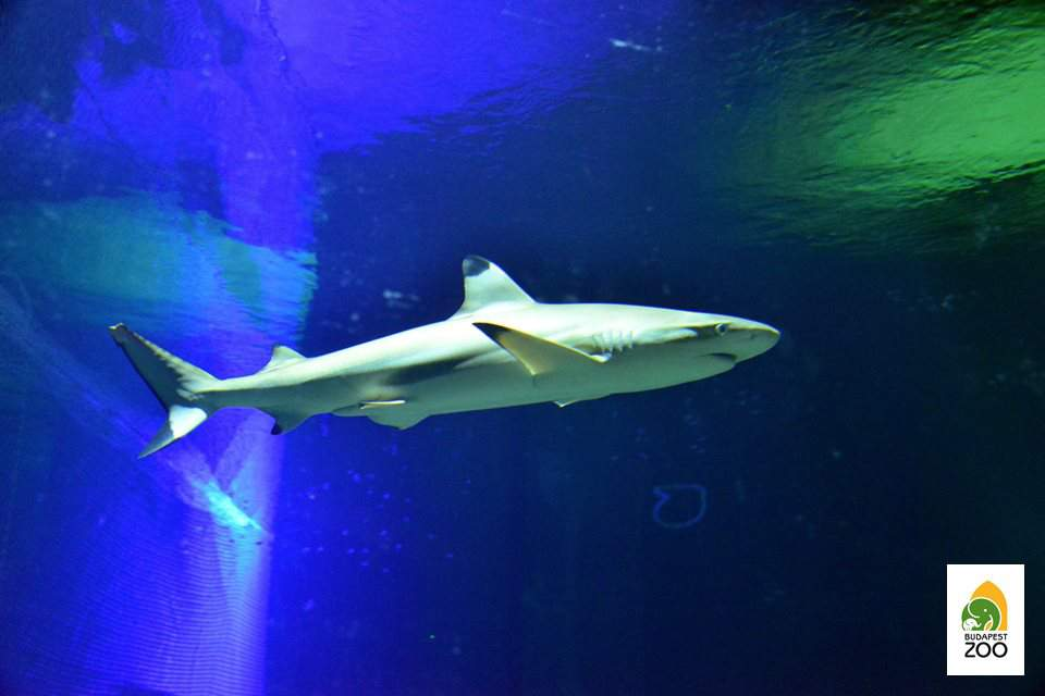 shark, zoo, marine, sea, animal