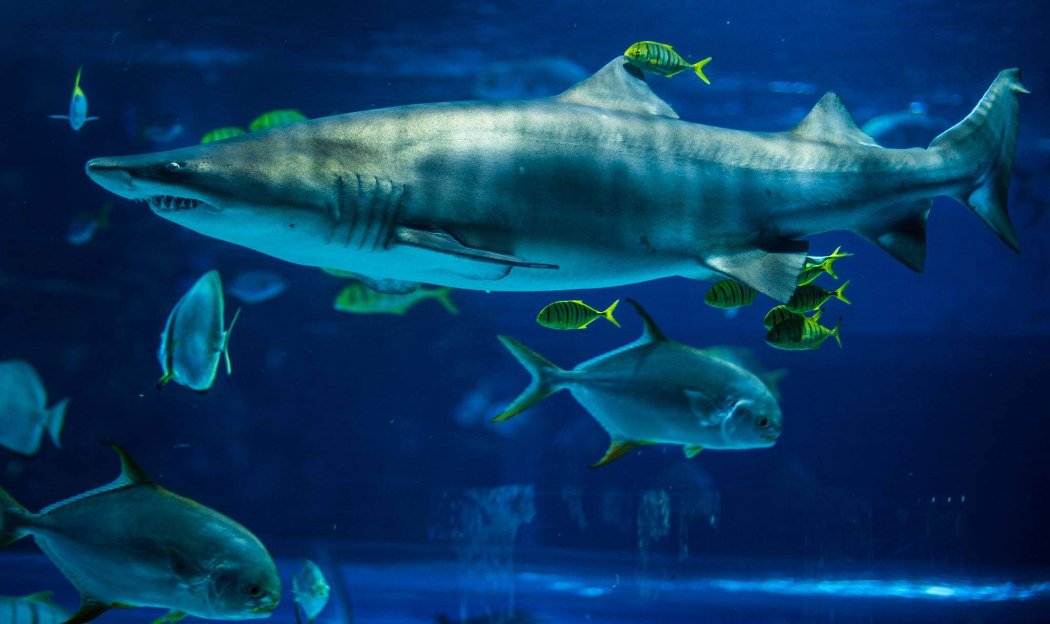 shark, tropicarium, zoo, animal, sea