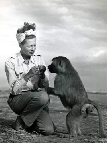 Ylla, monkey, photo, photographer