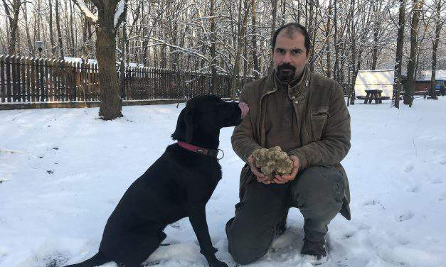 Record-size white truffle found in South Hungary