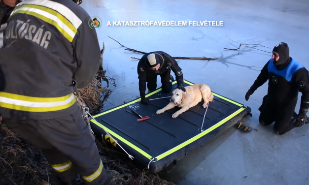 Rescued Hungarian dog the newest star in the United States – Video